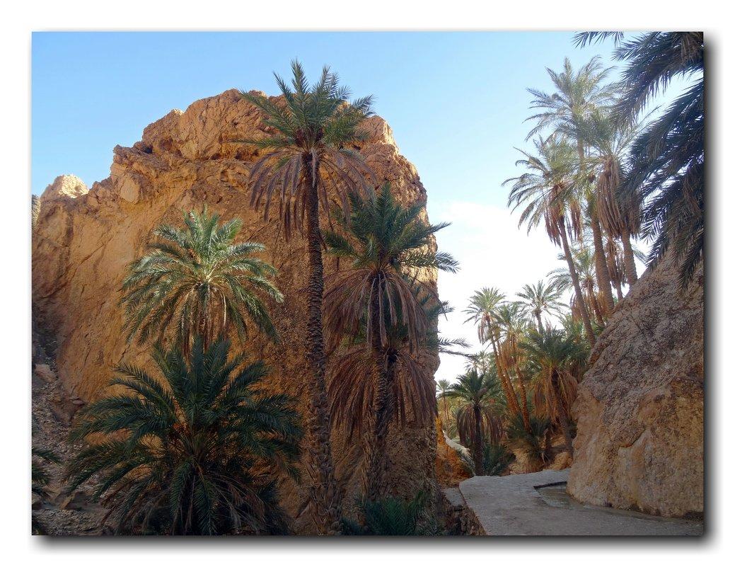 Горный оазис в пустыне. - Чария Зоя