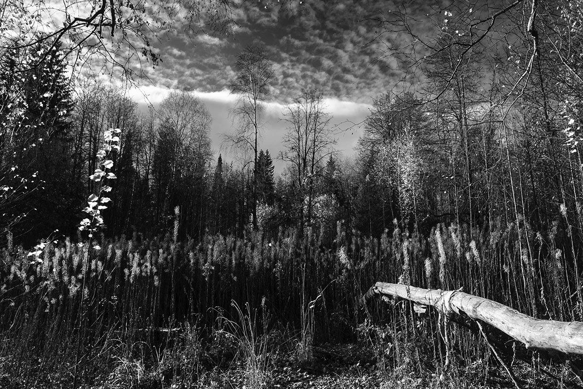 Осень. - Валерий Молоток