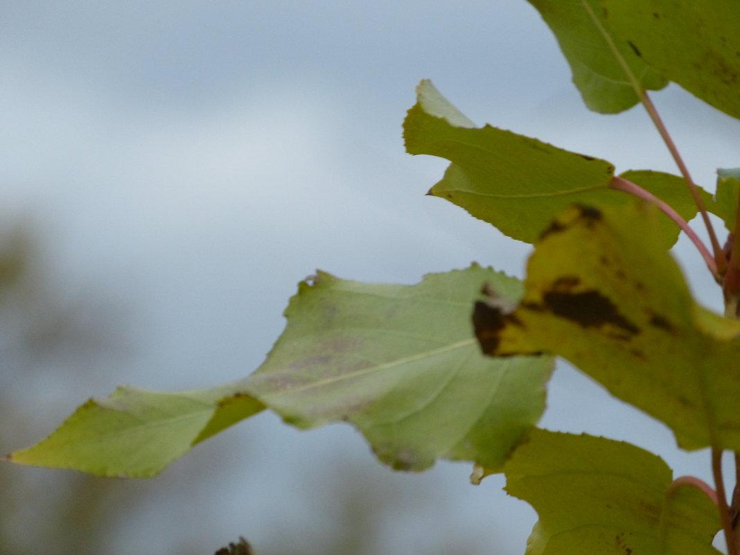 Листья желтые - Анастасия сосновская