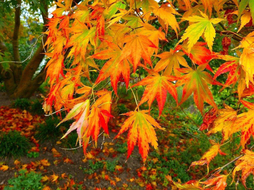Осенние листья - Nina Yudicheva