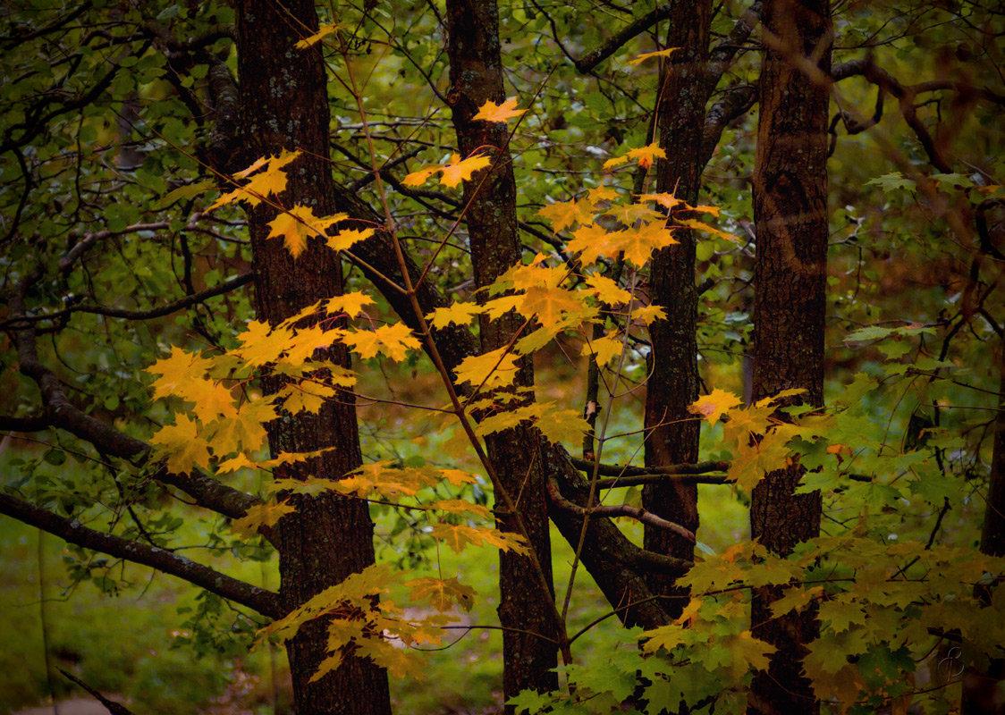 Осенний этюд - Виталий