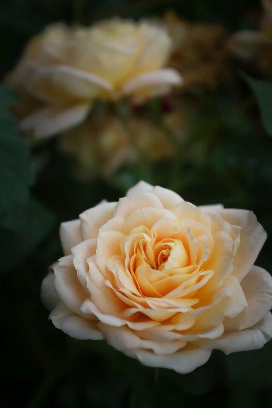 Осенняя королева - Настя