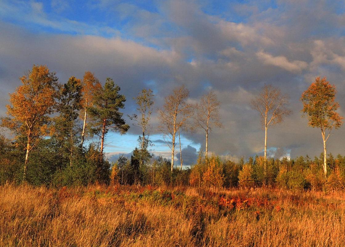 Осень золотая - Павлова Татьяна Павлова