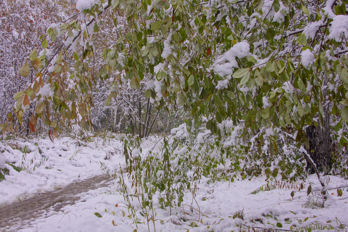 Первый снег---10 - Владимир Холодный