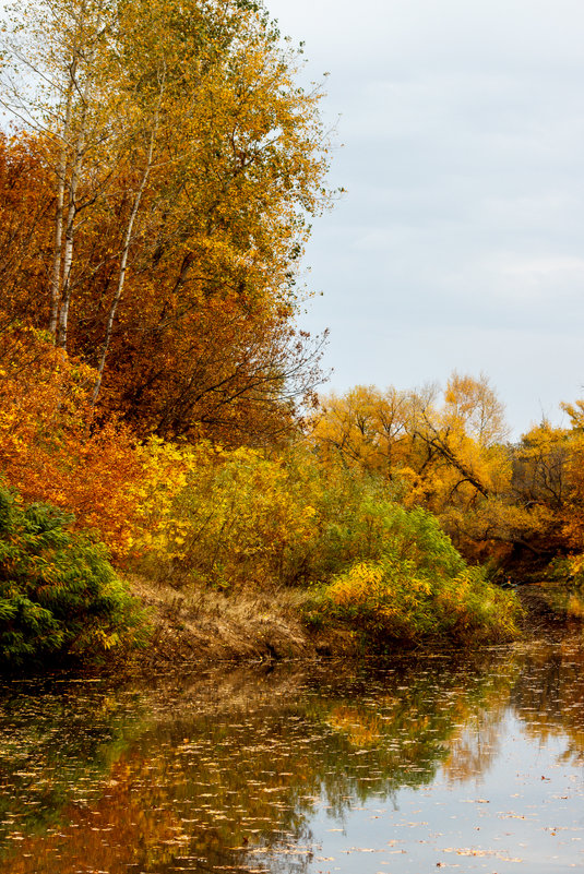 золотая осень - Надежда Щупленкова