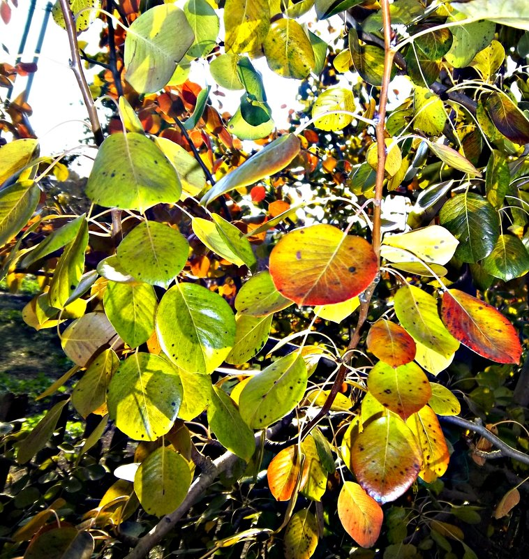 Осенние листья - Татьяна Королёва