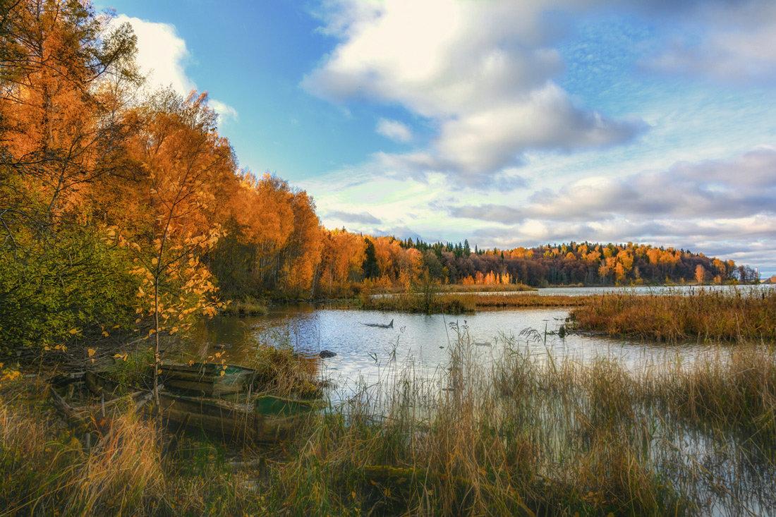Лесное озеро - vladimir Bormotov