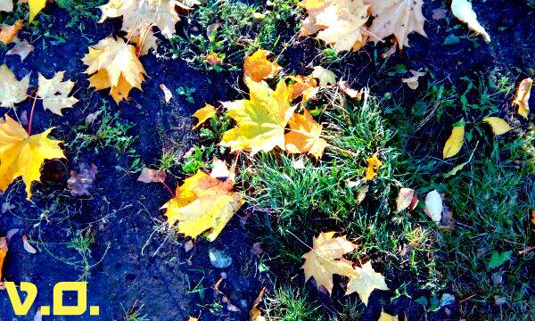 Осень - Вероника Озем