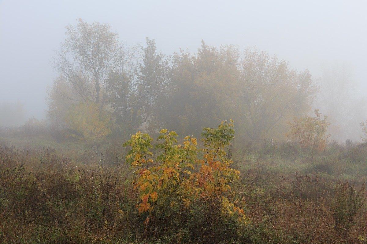 Туман - Виктор Ковчин
