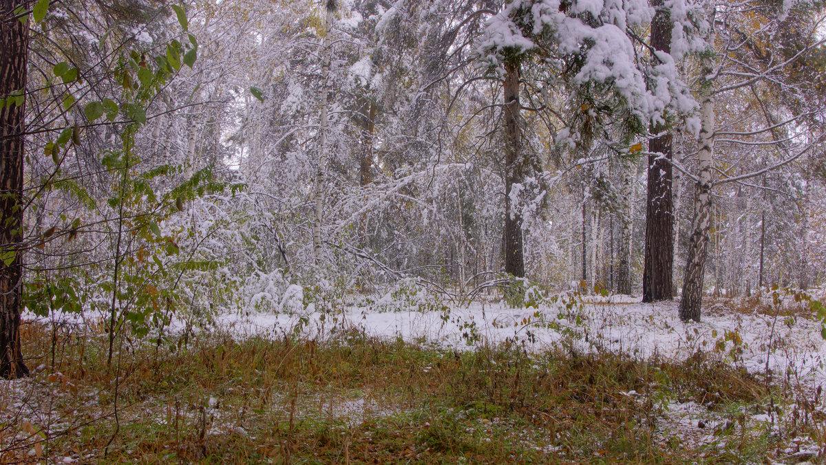 Первый снег---12 - Владимир Холодный