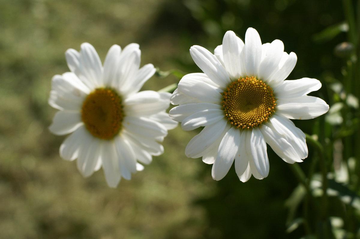 Остатки лета - Екатерррина Полунина