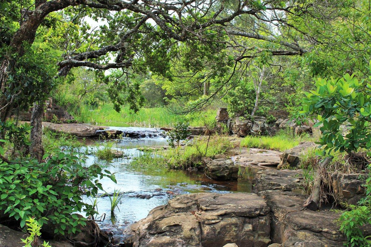 Природа ЮАР - Julia A