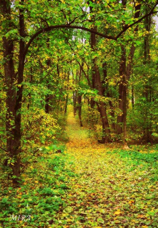 Тропинка в осень... - *MIRA* **