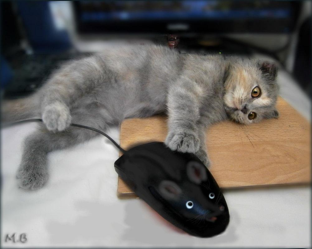 Кошка,живущая не в природе, знает о мышке лишь по наслышке... - Людмила Богданова (Скачко)