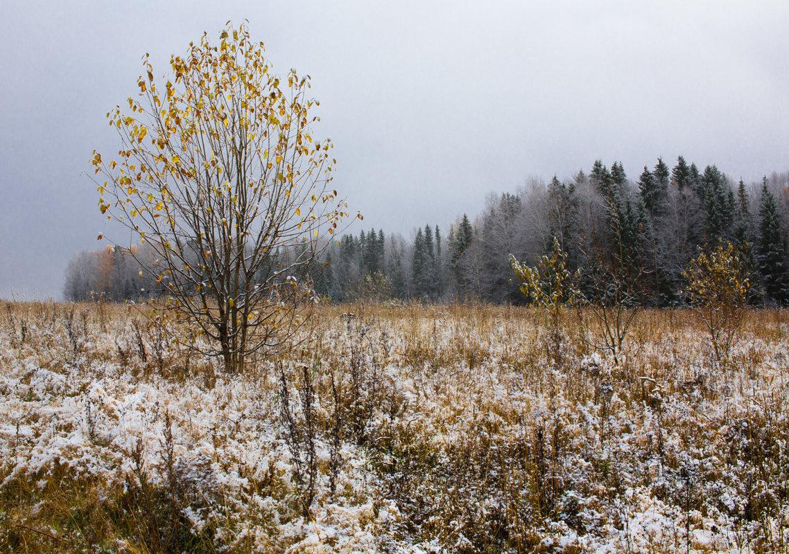 Скоро зима... - Sergey Apinis