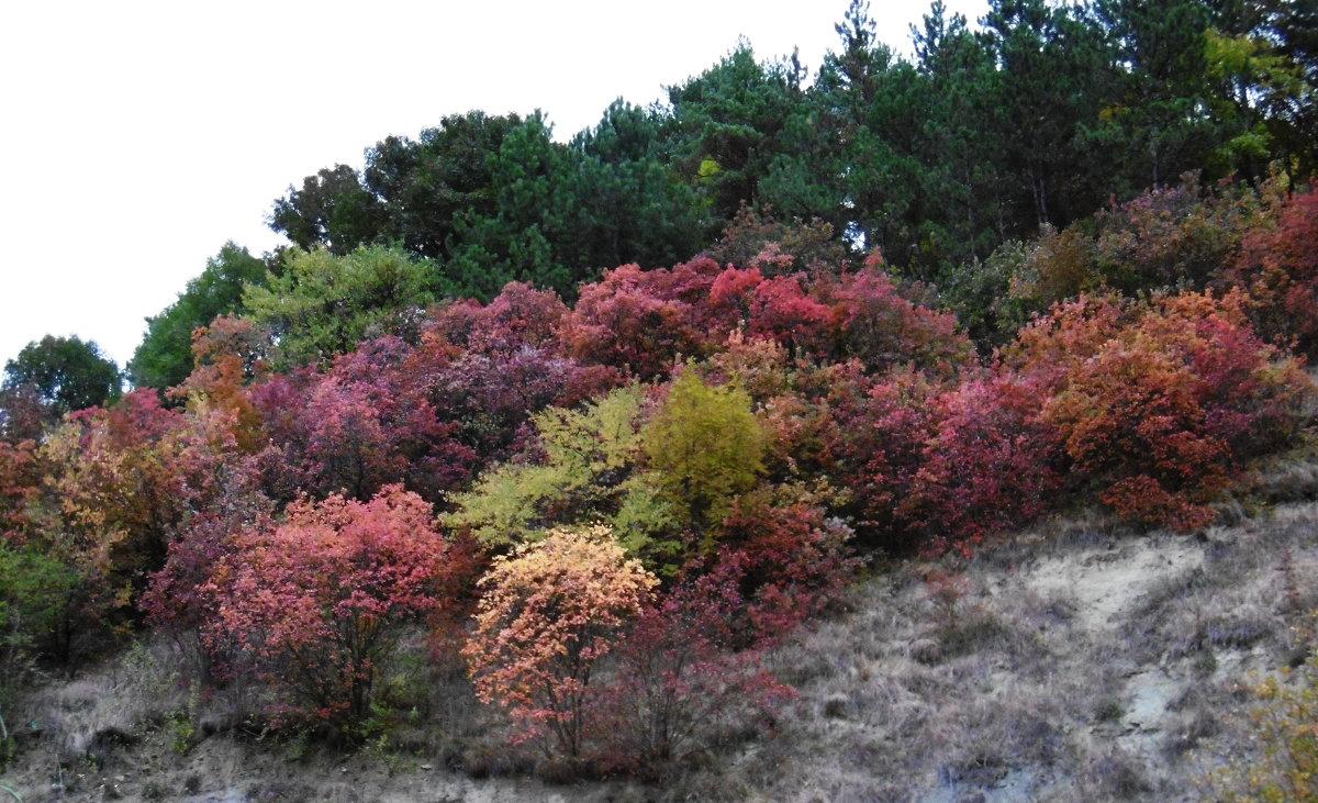 Краски осени - татьяна