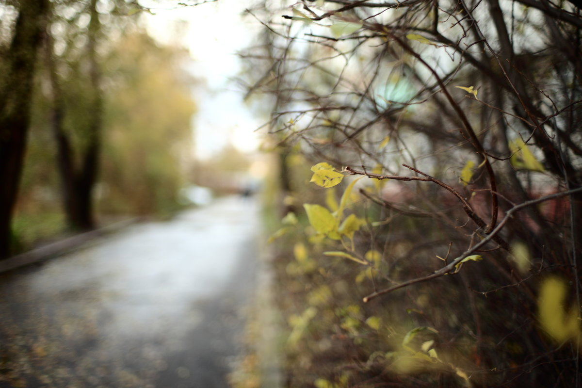 Осень - Evgenii Zlobin
