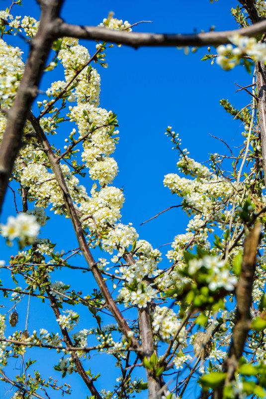 Это была весна - Света Кондрашова