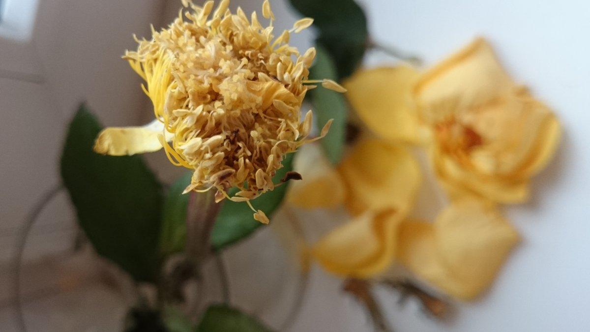 Вот такая серцевинка от розы осталась ... - Galina194701