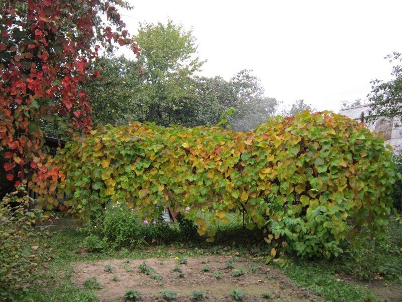 Виноград в сентябре - Дмитрий Никитин