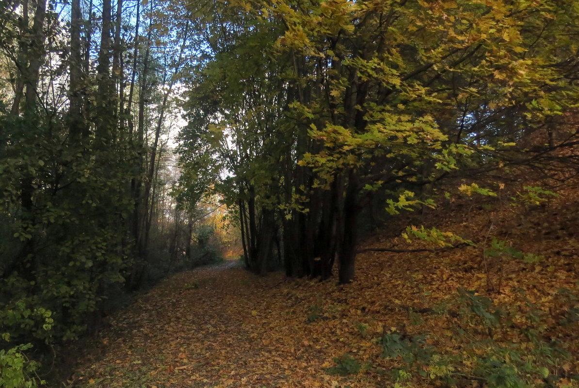 Осенний парк - Сергей Рубан