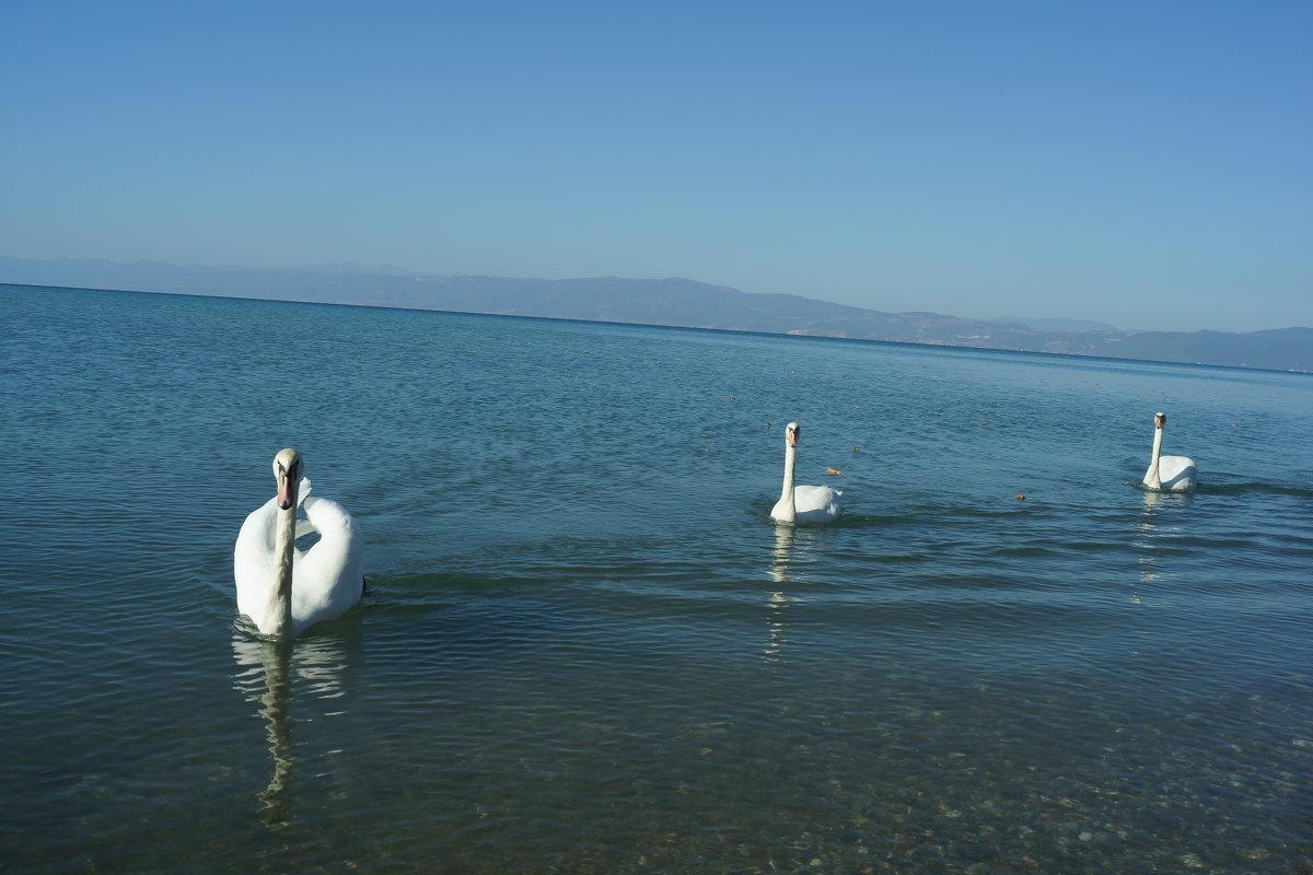 Лебединное озеро - Bogdan Snegureac
