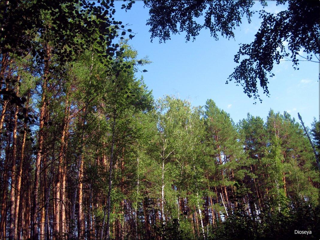 Лесной пейзаж - Татьяна Пальчикова