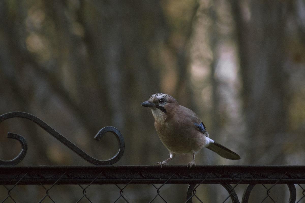 Осторожная птица - Aнна Зарубина