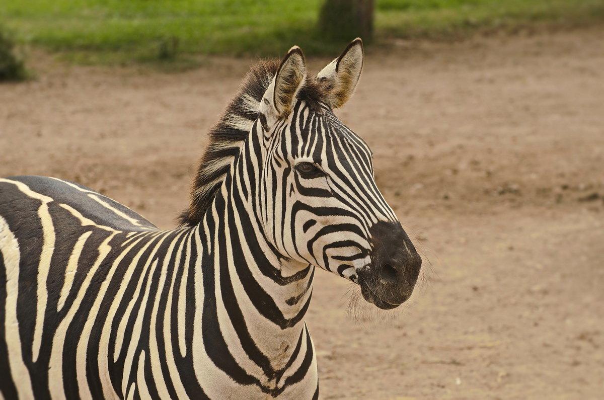 В зоопарке Лимы - Svetlana Plasentsiia