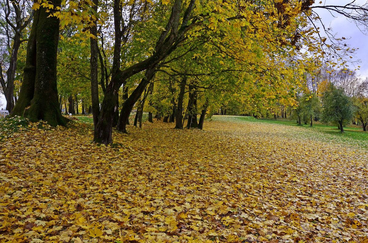 Осенние ковры - Miola