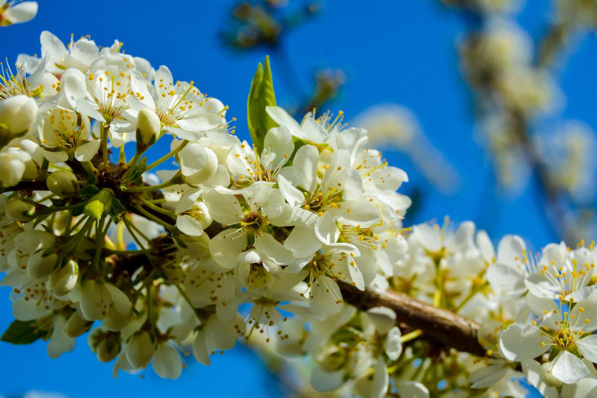 цветики - Света Кондрашова