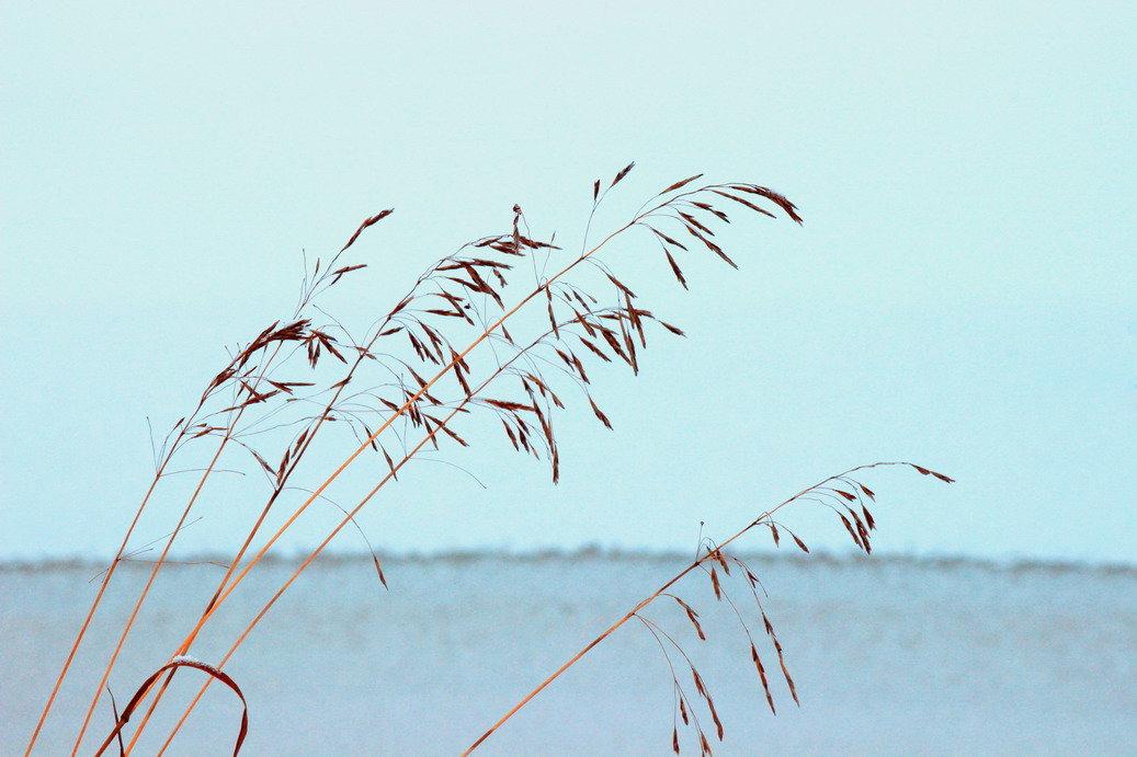 Травинка на ветру - Вера Моисеева