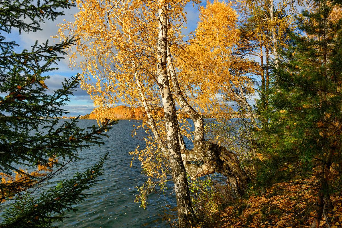 Осенний берег - vladimir Bormotov