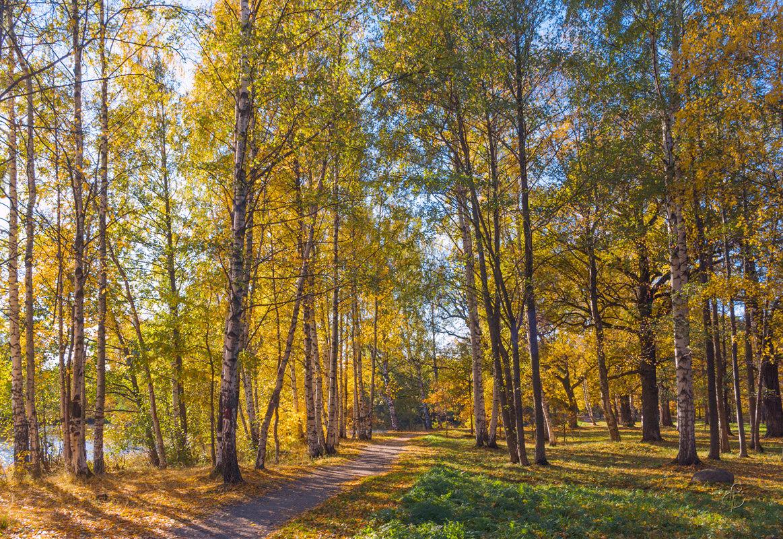 Чудный день осени 2 - Виталий