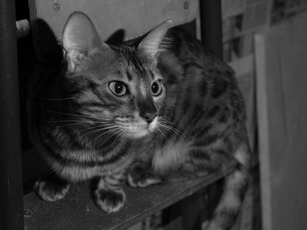 Кошка в ожидании хозяина - morgo