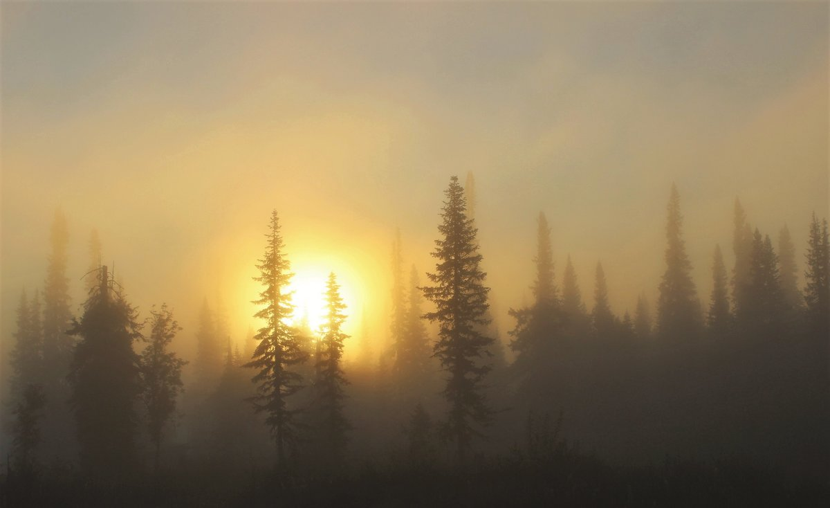 Солнце выкатилось из тумана - Сергей Чиняев