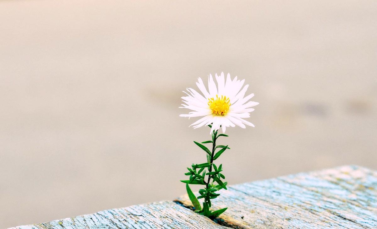 Осенний цветочек - Марина Романова