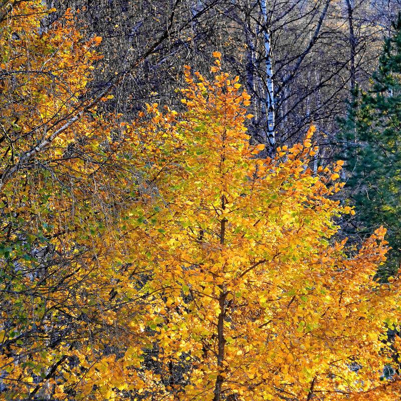 Осенний костер - Валерий Талашов