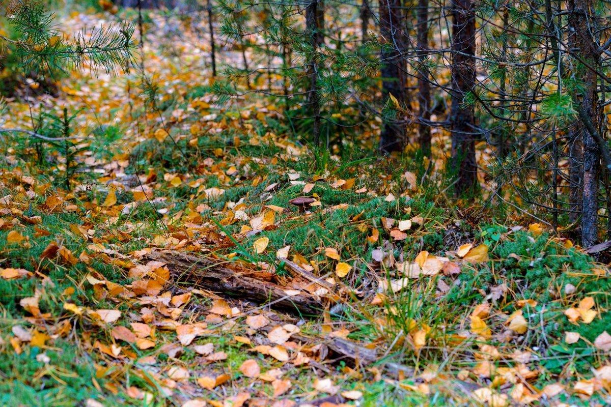 Осенний лес - Юрий Бичеров