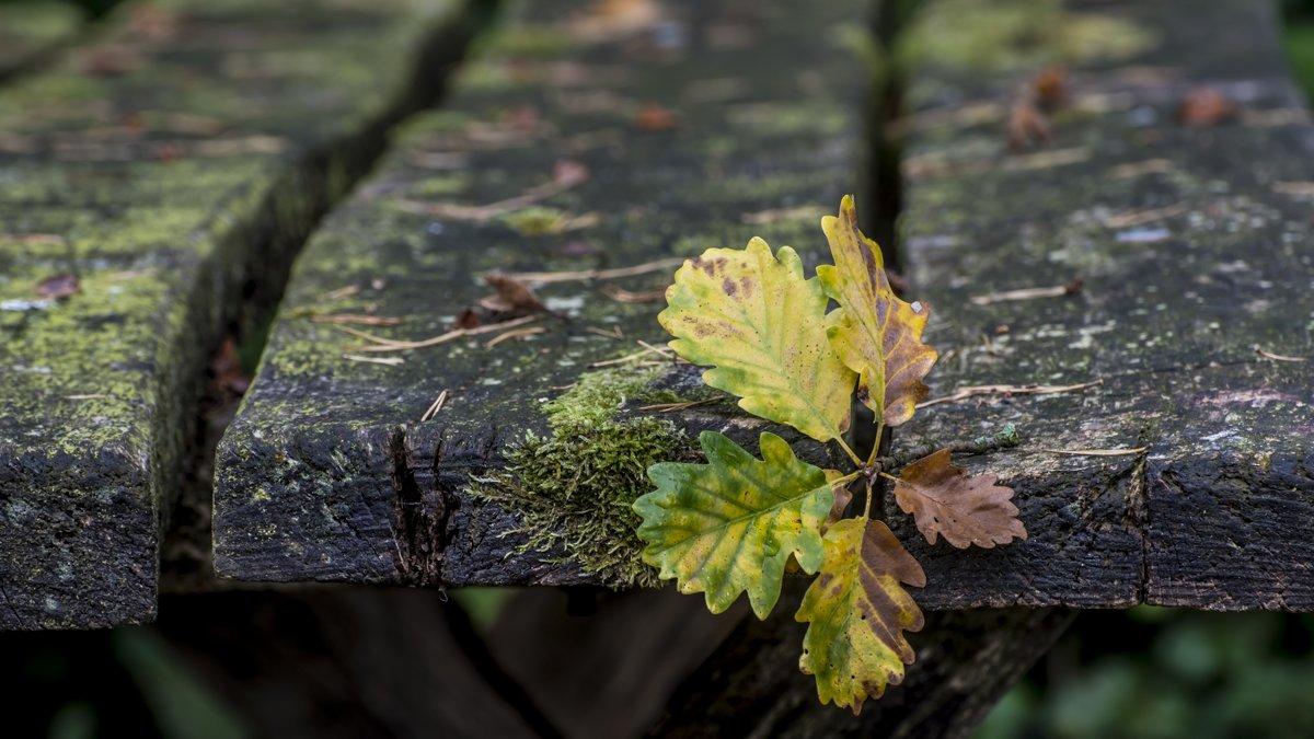 Autumn on the table - Dmitry Ozersky