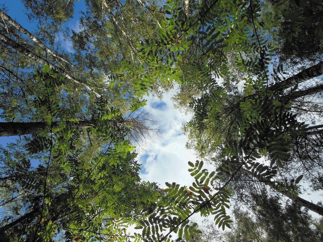Свод деревьев - Татьяна