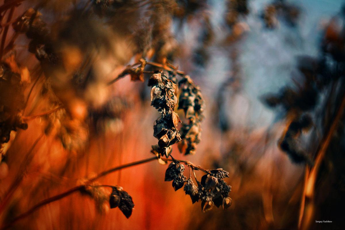 """Цветы осени..."" - Serg Y"
