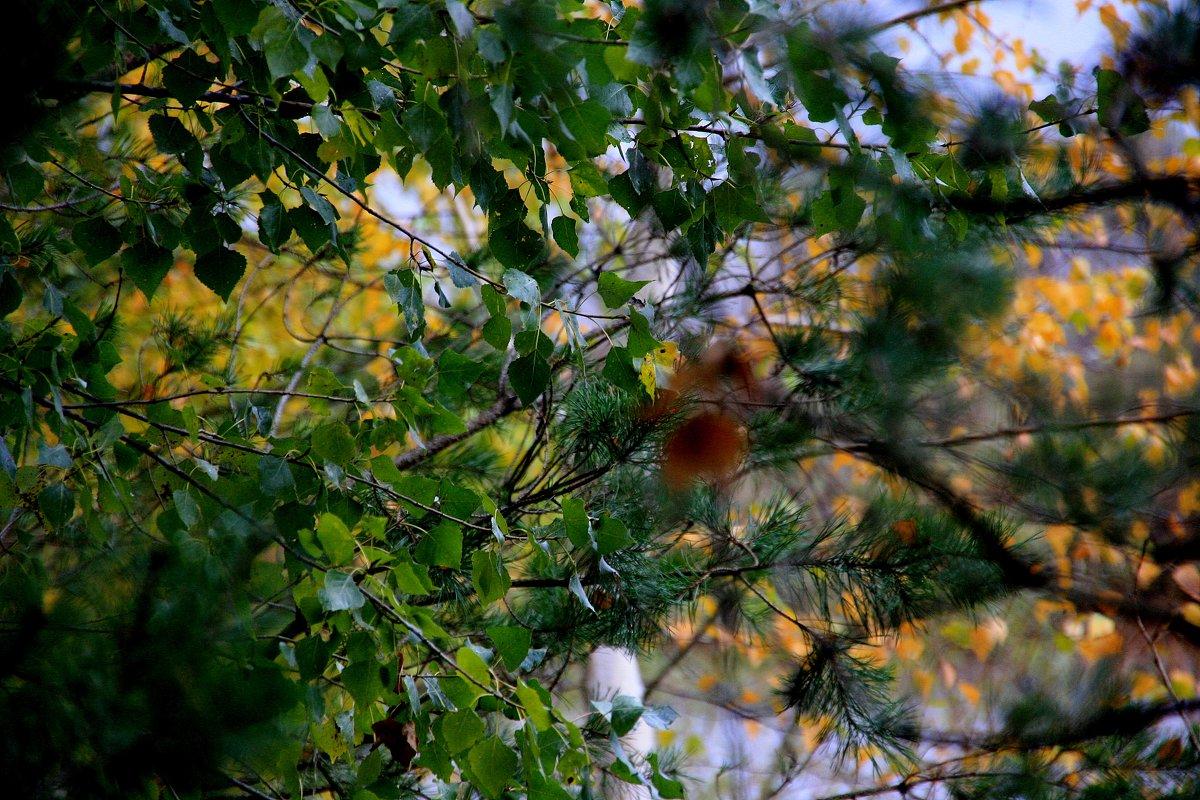И все-таки  осень.... - Валерия  Полещикова