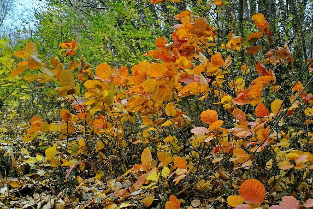 Осенняя акварель.... - владимир
