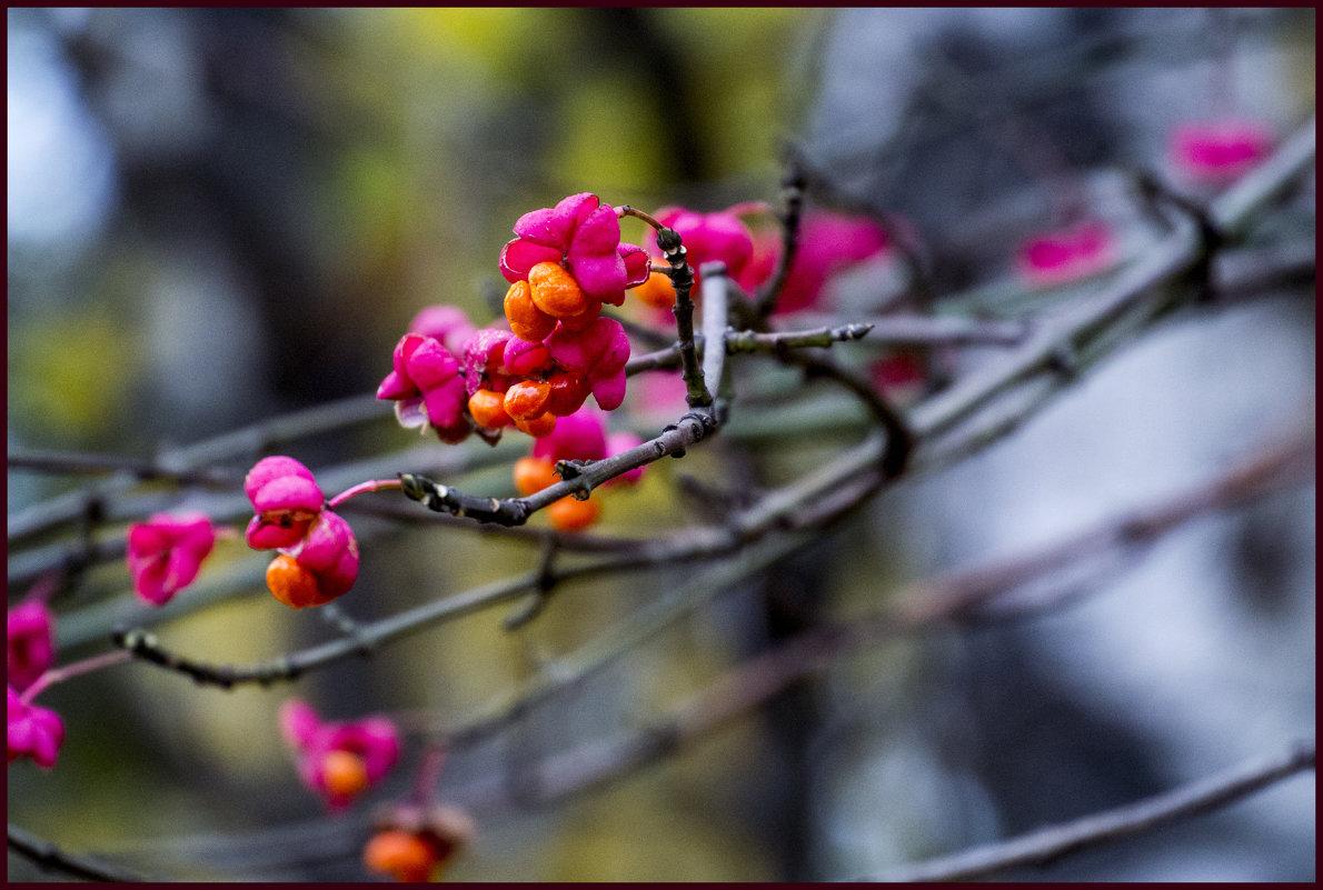 Осенний цвет. - IRINA VERSHININA