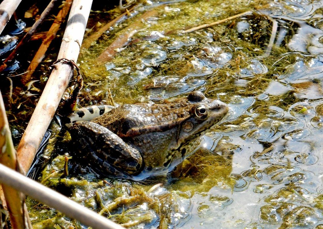 на что ловить лягушку в просто рыбалка