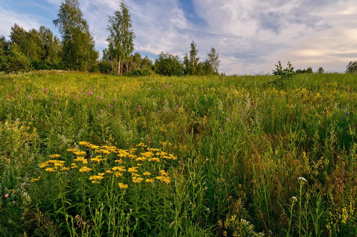 Лесные травы - Александр Березуцкий (nevant60)