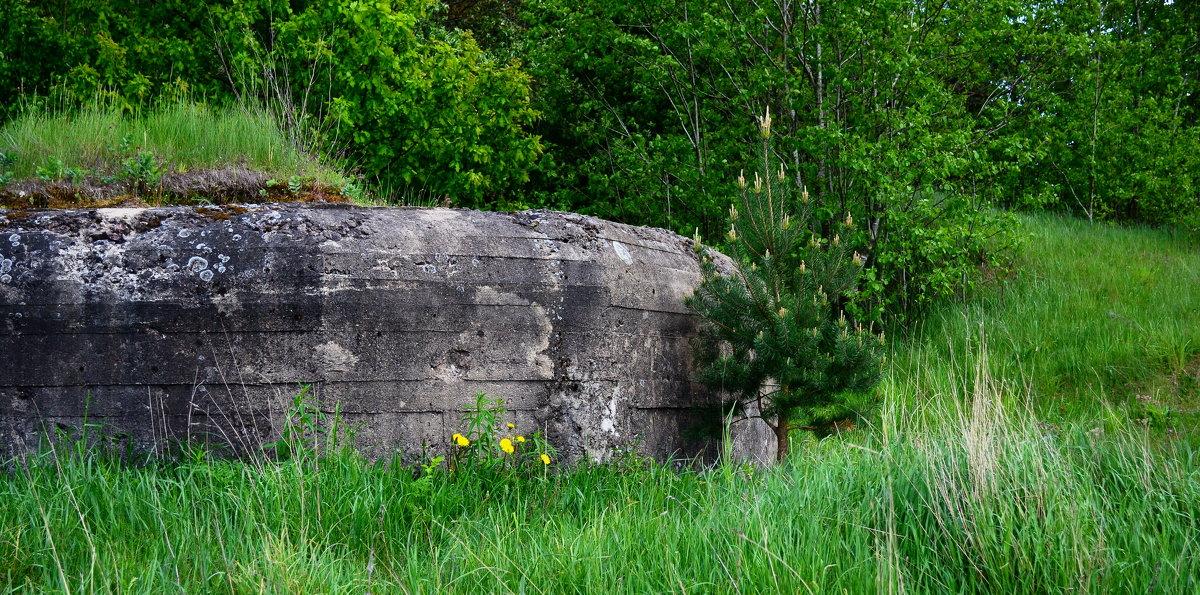 И на бетоне растут цветы - евген03 Левкович