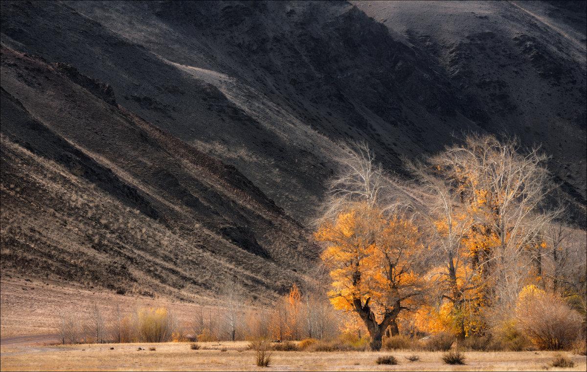 Седые деревья - Влад Соколовский