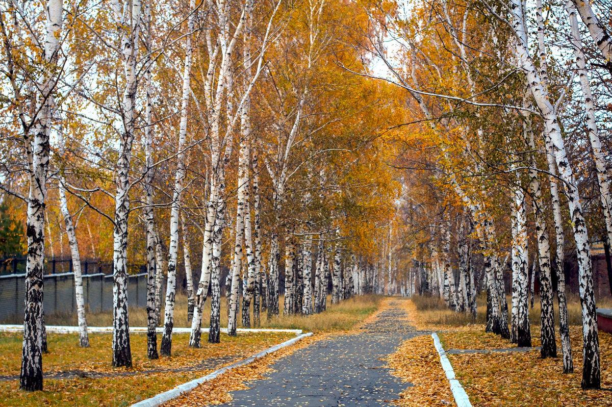 Засверкали в длинных косах жёлтых листьев огоньки. - Людмила
